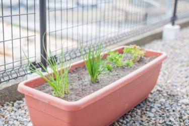 第2981号「集客用プランター農園」栽培から買い取りまでの仕組みが社会貢献